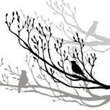 Bird at tree silhouettes Stock Photo