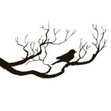 Bird at tree silhouettes Royalty Free Stock Image