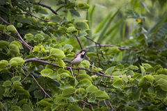 Bird in tree. Royalty Free Stock Image