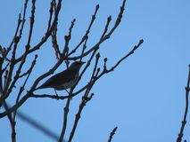 Bird in tree top at evening stock photo