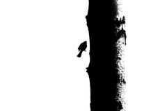 Bird and tree trunk silhouette - 2. Black and white contrast silhouette of bird and tree trunk. Conceptual abstract composition vector illustration