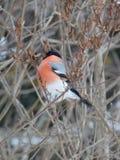 Bird on the tree. Royalty Free Stock Photography