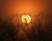 Bird and trees silhouetted against a golden sunris Royalty Free Stock Images