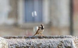 Bird in Trento Stock Image
