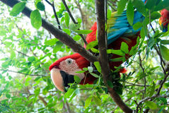 Bird in the tropic jungle. Tropical bird in the branches of a tree Royalty Free Stock Photo
