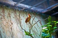 Bird tropics. Ueno zoo Tokyo Japan Stock Image