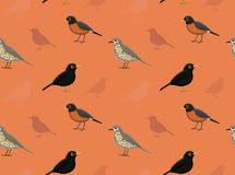 Bird True Thrush Wallpaper Stock Photos