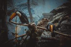 BIRD OF TUKAN stock image