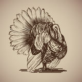 Bird turkey in sketch style. Vector illustration livestock drawn by hand. Farm animals on gray background Royalty Free Stock Images