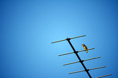Bird on TV antenna and a clear blue sky Royalty Free Stock Photo