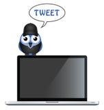 Bird Tweet Royalty Free Stock Photo