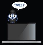 Bird Tweet Royalty Free Stock Image