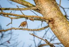 Bird on a twig Stock Image