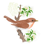 Bird on a twig jasmine vector Royalty Free Stock Image