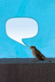 Bird twittering. House Sparrow (Passer domesticus) on blue Wall twittering with empty text bubble Stock Images