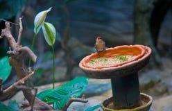 Bird, Ueno zoo Tokyo Japan Stock Photography