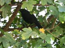 Bird2 imagen de archivo libre de regalías