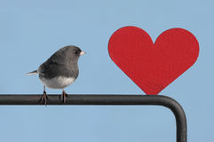 Bird With Valentine Heart Stock Images