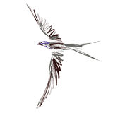 Bird (vector) Royalty Free Stock Images