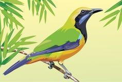 Bird vector Stock Photo