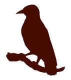 Bird. Vector drawing Royalty Free Stock Images