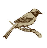 Bird. Vector drawing Royalty Free Stock Image