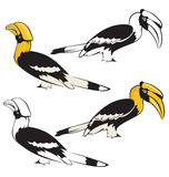 Bird. Vector illustration of hornbill bird Stock Photo
