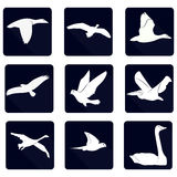 Bird Vector Silhouette. Bird, silhouette, flying, black white, duck, eagle, dove, pigeon, goose, parrot, background, sky, flight, fly, symbol, logo, wing Royalty Free Stock Images