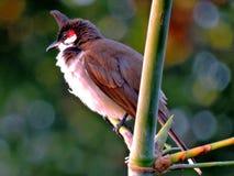 Bird Royalty Free Stock Photo