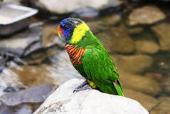 Bird. Very colorful and beautiful bird Stock Image