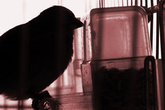 Bird view. Bird eating hour. Bird is in the jail Stock Photography