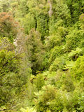 Bird view of lush green sub-tropical NZ rainforest royalty free stock images