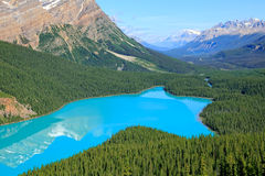 Bird view on Peyto lake Royalty Free Stock Images