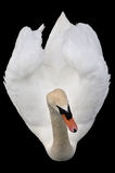 Bird view of a swan Royalty Free Stock Photography