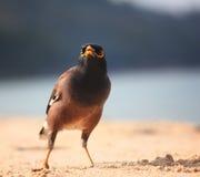 Bird walking on sandy beach Royalty Free Stock Photos