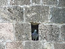 Bird in wall Stock Photos