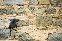 Bird in the wall. Tuscany landscape  Near Pienza, Vall d'Orcia Italy Royalty Free Stock Images