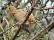 Bird Warbler in the wild stock photo