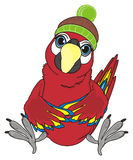 Bird in warm hat. Red parrot ara sit in warm winter hat Royalty Free Stock Photography
