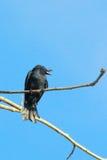 Bird on watch tower Royalty Free Stock Photos