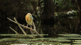 Bird watching. In Danube Delta, Romania Royalty Free Stock Photography