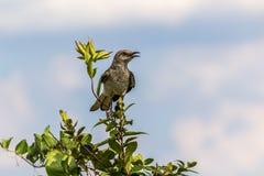 Bird-watching della mamma sul livello Immagini Stock Libere da Diritti