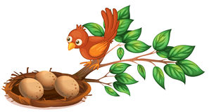 A bird watching the eggs. Illustration of a bird watching the eggs on a white background Stock Image