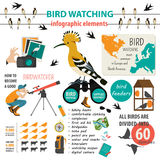 Bird watching infographic template Stock Photography