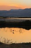 Bird Watching, Lesvos Island, Greece Stock Image