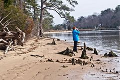 Bird Watching on the Lynnhaven River. Bird watching among the cypress knobs on a sandy beach along the Lynnhaven River in Virginia Beach, Virginia Stock Image