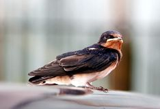 A bird. Watching the outer Stock Image