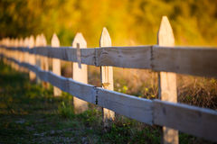 Bird watching the sunset. Picture of a bird watching the sunset sitting on a wooden fence royalty free stock images