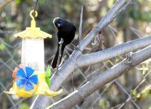 Bird watching water fountain royalty free stock image