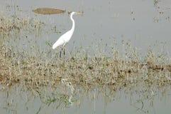 Bird at water royalty free stock photos